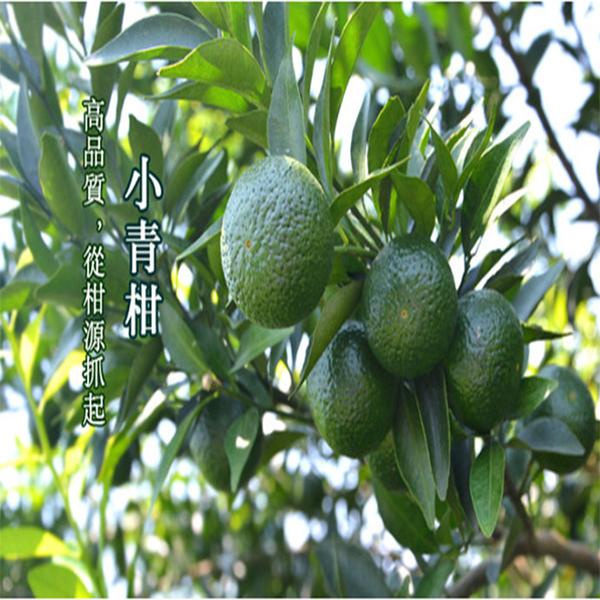 安盛小青柑/新会小青柑厂/小青柑加工/新会柑苗/大红柑加工
